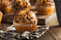 Hemlagad choklad Chip Muffins Arkivfoton