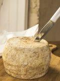 Hemlagad fransk ost Arkivbild