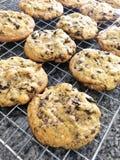 Hemlagad krämoreo för kakor n med mjuka kakor för chokladchip på galler fotografering för bildbyråer