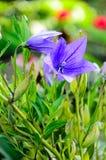 Hemlagade blommor Royaltyfri Foto
