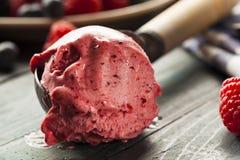 Hemlagade organiska Berry Sorbet Ice Cream fotografering för bildbyråer