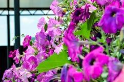 Hemlagade rosa färgblommor Royaltyfri Bild