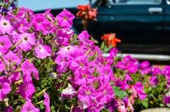 Hemlagade rosa färgblommor Arkivbild