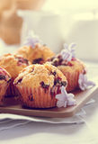 Hemlagade svarta bärmuffin för moderns dag frukosterar Arkivfoto