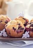 Hemlagade svarta bärmuffin för moderns dag frukosterar Arkivfoton