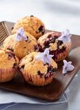 Hemlagade svarta bärmuffin för moderns dag frukosterar Royaltyfri Fotografi