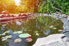 Hemlagat dekorativt damm för fisk i trädgården med dekorativt royaltyfri foto