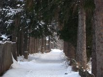 Hemlig bana till den förtrollade skogen arkivbilder