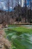 Hemlig flod med sagolika vatten- växter arkivbilder