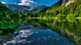 Hemlig sjö i den lösa skogen stock video