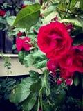 hemlig trädgård II arkivfoton