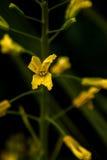 Hemliga blommor Arkivbild