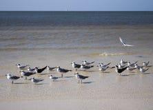 Hemliga Seagulls? Arkivbilder