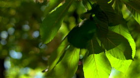 Hemligheter av skogen Fotografering för Bildbyråer