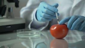 Hemligt laboratorium som producerar olagligt genetiskt ändrade grönsaker stock video