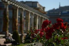 Hemligt romantiskt ställe och röda rosor royaltyfria foton