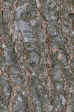 Hemlock tree bark background Royalty Free Stock Images