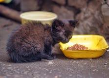 Hemlös kattunge på gatan Arkivbild