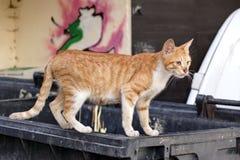 Hemlös rödhårig man Kitten Cat On The Trash Container Arkivfoton