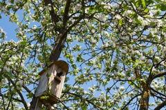 Hemmastadd fågelstare Arkivfoto