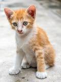 Hemmastadd trädgård för gullig kattunge Royaltyfri Foto