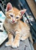 Hemmastadd trädgård för gullig kattunge Royaltyfria Bilder