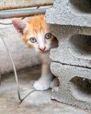 Hemmastadd trädgård för gullig kattunge Fotografering för Bildbyråer