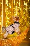 Hemmastatt nytt år 2018 för Yorkshire terrier med glödande guld- bokeh som bakgrund Royaltyfria Foton