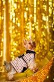 Hemmastatt nytt år 2018 för Yorkshire terrier med glödande guld- bokeh som bakgrund Arkivbild
