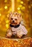 Hemmastatt nytt år 2018 för Yorkshire terrier med glödande guld- bokeh som bakgrund Royaltyfria Bilder