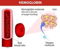 Hemoglobina da molécula Imagens de Stock