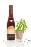 Hemp beer. Royalty Free Stock Photo