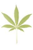 Hemp (cannabis) Stock Image