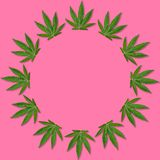 Hemp or cannabis Leaf Picture frame stock photo