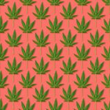 Hemp or cannabis leaves seamless pattern. Close up of fresh Cannabis leaves on white background stock images