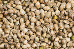 Hemp - cannabis seeds. A some hemp - cannabis seeds royalty free stock photo