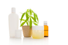 Hemp cosmetics. Moisturizer, cream, shampoo, oil and young cannabis plant in plant pot on white background. Healthy natural ecological cosmetics Stock Photos