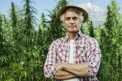 Hemp farming. Confident farmer posing with arms crossed in his hemp field and smiling at camera royalty free stock photos