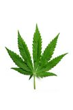 Hemp leaf Royalty Free Stock Photo