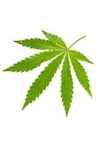 Hemp leaf Stock Photo