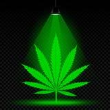 Hemp leaf lamp light. Hemp leaf grows in lamp lights. Dust falls on transparent background. Growing cannabis marijuana plant in the laboratory Stock Photography