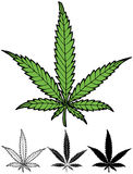 Hemp Leaf. Hand drawn hemp leaf in 4 versions, including silhouette Stock Photography