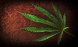 Hemp leaf on old red background, close-up. Hemp leaf on old red background, close up royalty free stock photos