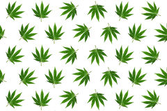 Hemp leaves background Stock Photo
