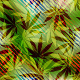 Hemp leaves on blurred Stock Photos