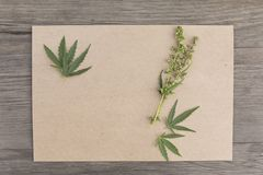 Hemp leaves and flowers with craft blank paper on old grunge wooden background. Top view. Minimalistic mockup. royalty free stock photos