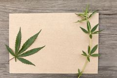 Hemp leaves and flowers with craft blank paper on old grunge wooden background. Top view. Minimalistic mockup. stock photos