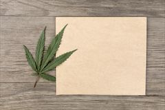 Hemp leaves and flowers with craft blank paper on old grunge wooden background. Top view. Minimalistic mockup. Hemp leaves and flowers with craft blank paper on stock photography