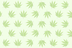 Hemp leaves pastel background Royalty Free Stock Photo