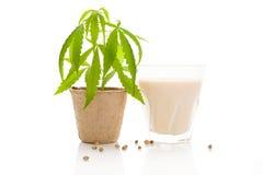 Hemp milk. Stock Photos